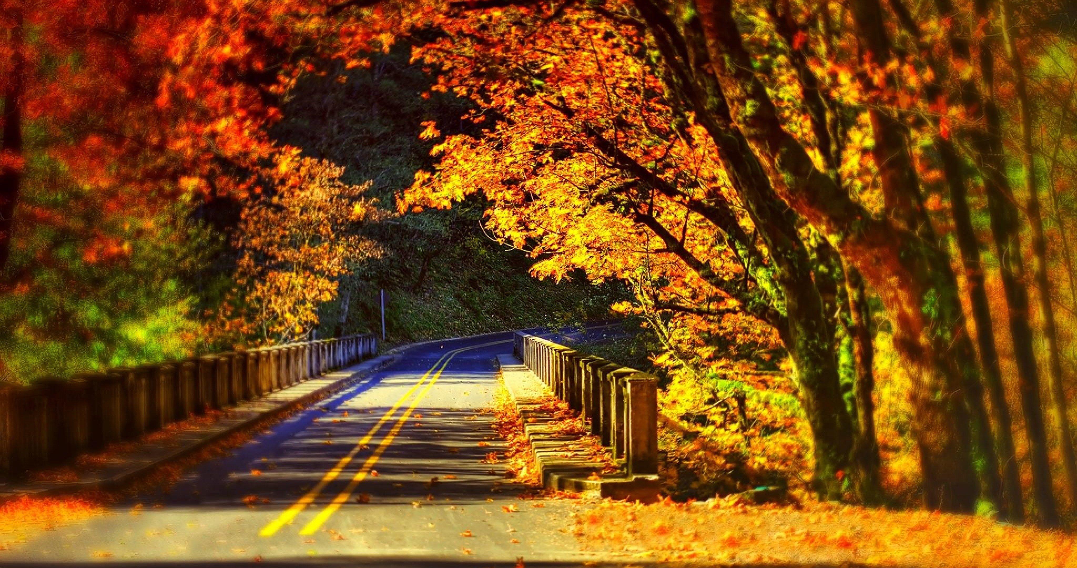 Road Bridge In Colorfull Nature 4k Ultra Hd Wallpaper Autumn Scenery Scenery Wallpaper Scenic Autumn