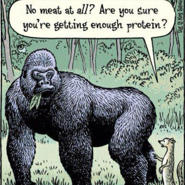 edibles are the richest protein sources, just ask the gorillas; the strongest that walk the earth who can pick up to ten times more than what they weigh.