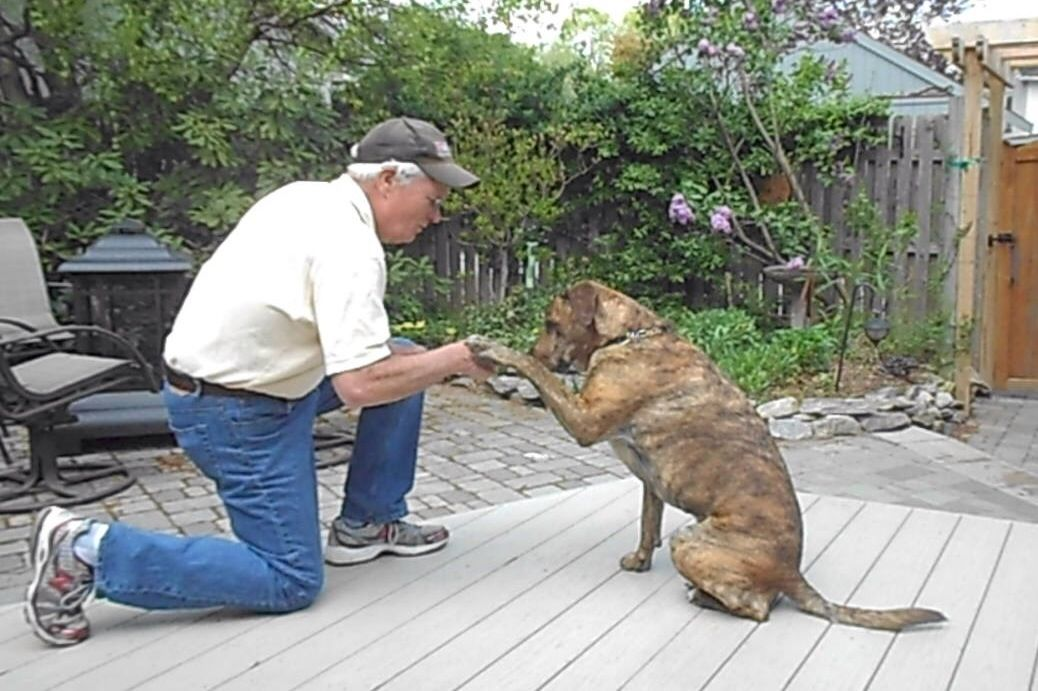 How To Teach Your Dog To Shake Hands Recipe Dogs Dog Toys