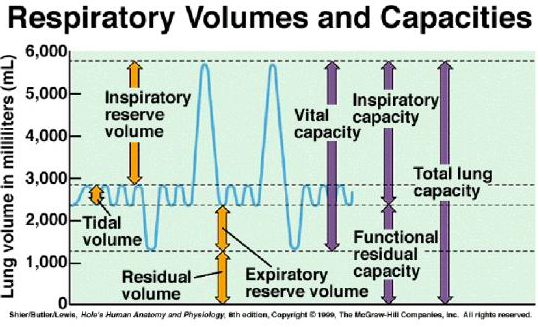 Lung Volumes Definitions Measuring Teachmephysiology