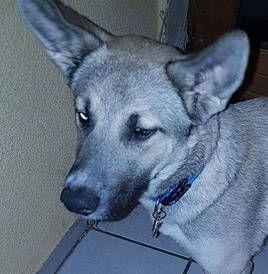 Sucht Dringend Ein Zuhause Oder Eine Pflegestelle Name Joy Geschlecht Weiblich Rasse Grosse Geb 13 01 201 Hunde Vermittlung Hunde Fotos Ausgestopftes Tier