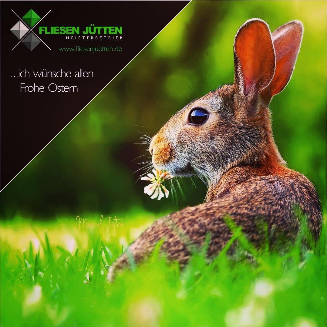 Werbung Unbezahlt Fliesenjutten Fliesenfirma Fliesen Fliesenlegermeister Fliesenleger Wandfliesen Bodenfliesen Fliesenliebe Badezi Animals Rabbit