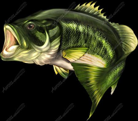4a3b3b6a 88e2 3334 4721 4c1f863df6e0 Png 450 395 Bass Fishing Cornhole Largemouth Bass