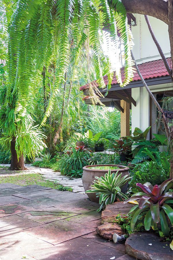 tropical landscaping #tropicallandscape
