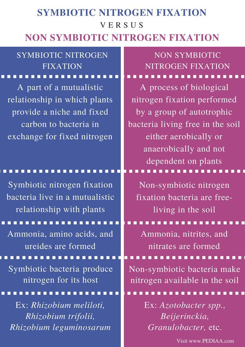 Difference Between Symbiotic And Non Symbiotic Nitrogen Fixation Comparison Summary Nitrogen Fixation Nitrogen Science Flashcards [ 1129 x 799 Pixel ]