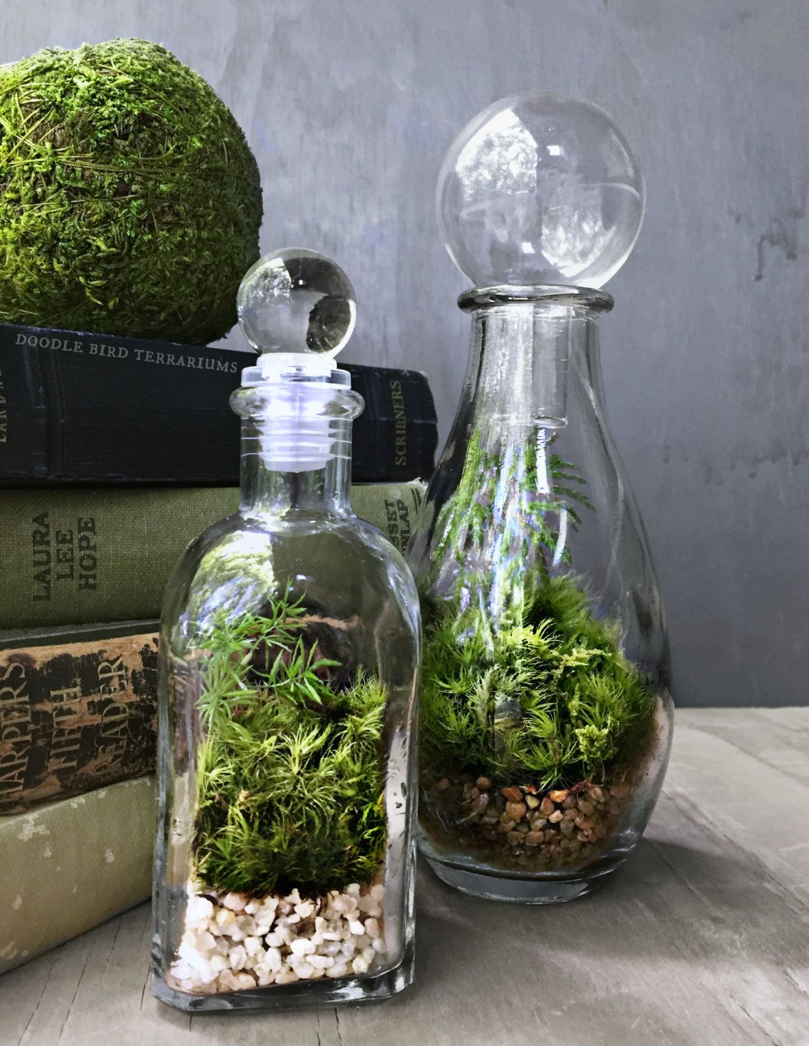 perfume bottle terrarium with glass stopper by doodlebirdie on etsy terrariums and miniature. Black Bedroom Furniture Sets. Home Design Ideas