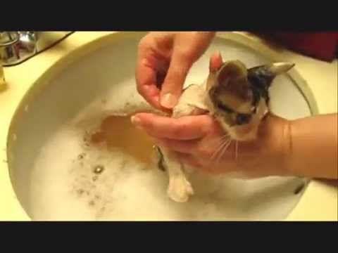 Graphic Flea Infestation In Kitten Youtube Fleas On Kittens