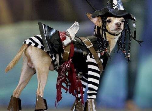 Pirates of the Caribbean Jack Sparrow Dog Costume