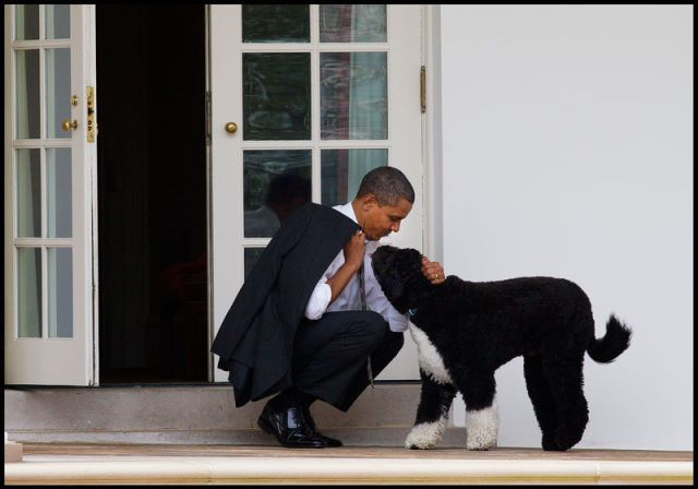 Bo & the president