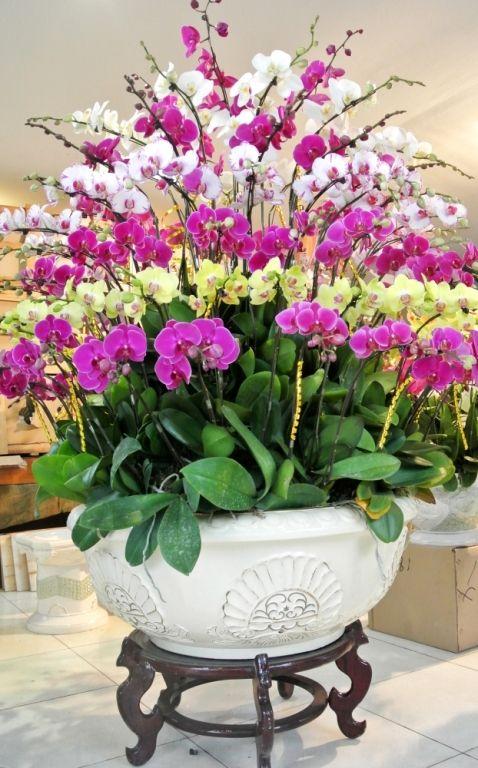 hoa lan hồ điệp,hoa lan hồ điệp tím,hoa lan hồ điệp rừng,hoa lan hồ điệp  giả,hoa lan hồ điệp bằng pha lê,hoa lan hồ điệp trắng,hoa la… | Çiçek,  Güzel çiçekler, Doğa