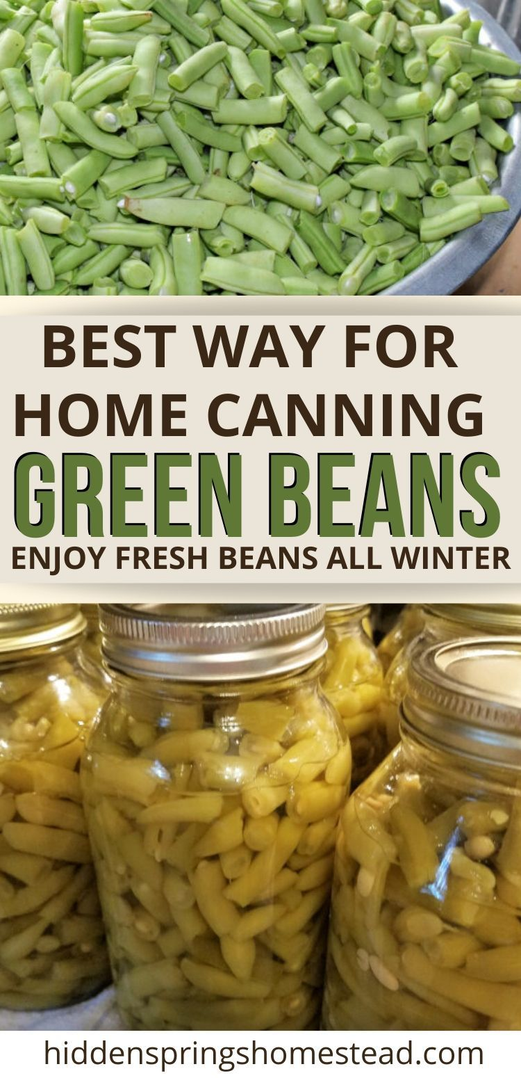 Canning fresh green beans hot pack method. They are much