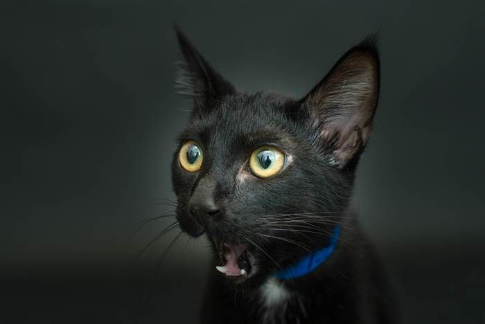 Happy National Black Cat Day Show Us Your Beautiful Black Kitties Black Cat Adoption Black Cat Superstition Cute Cats