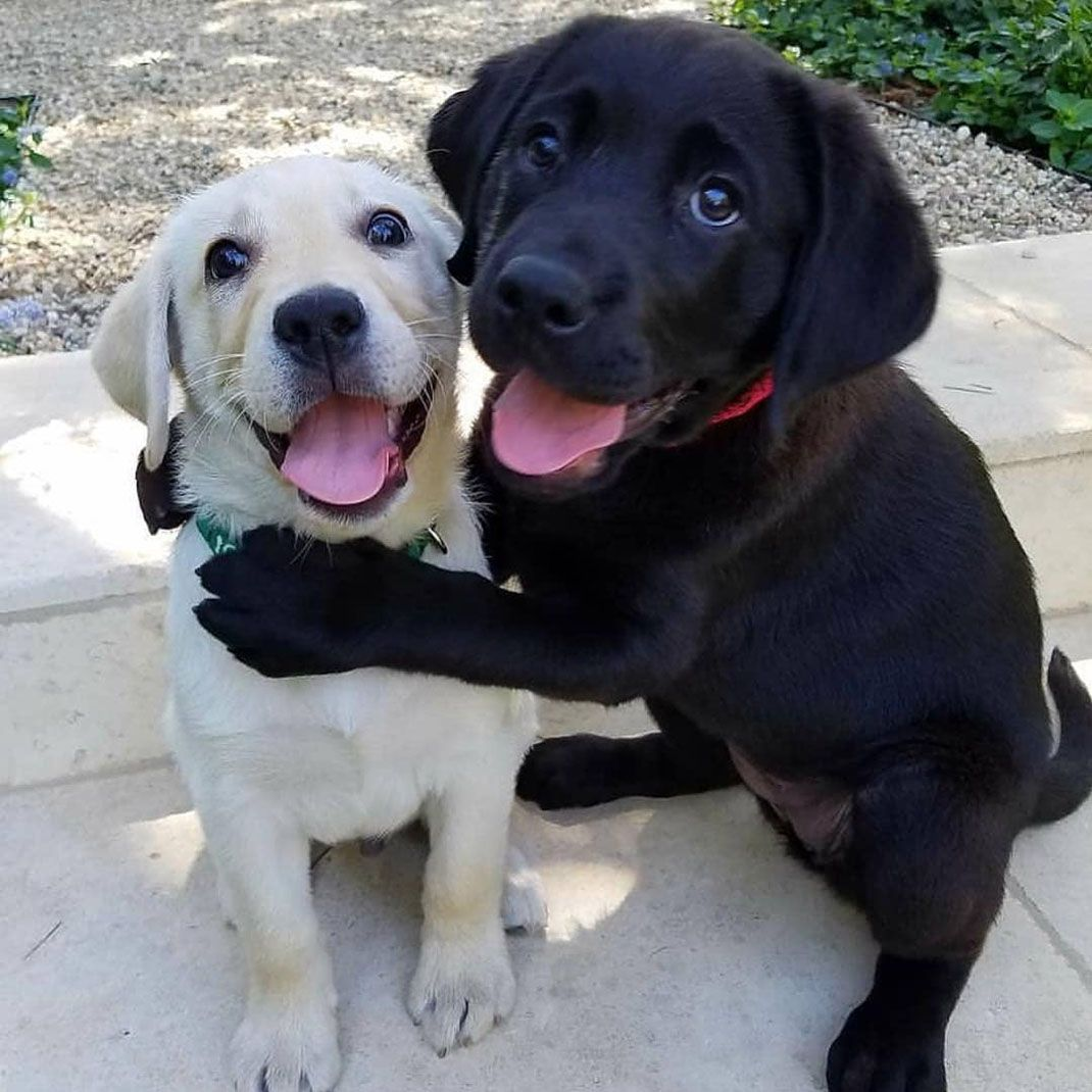 When There Is No Difference Between Black And White Cute Dogs