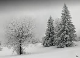 winterscenes - Google Search