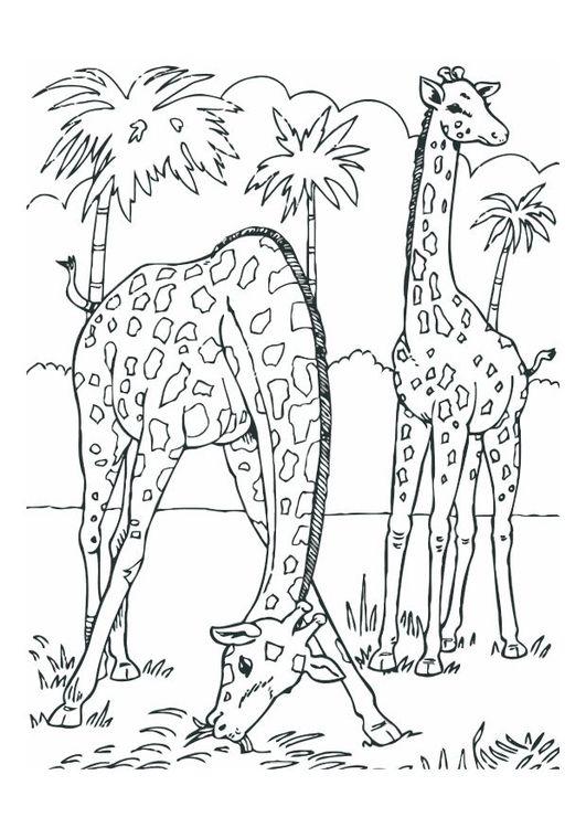 Malvorlage Giraffen Ausmalbild 12534 Lowen Malvorlagen Malbuch Vorlagen Ausmalbilder