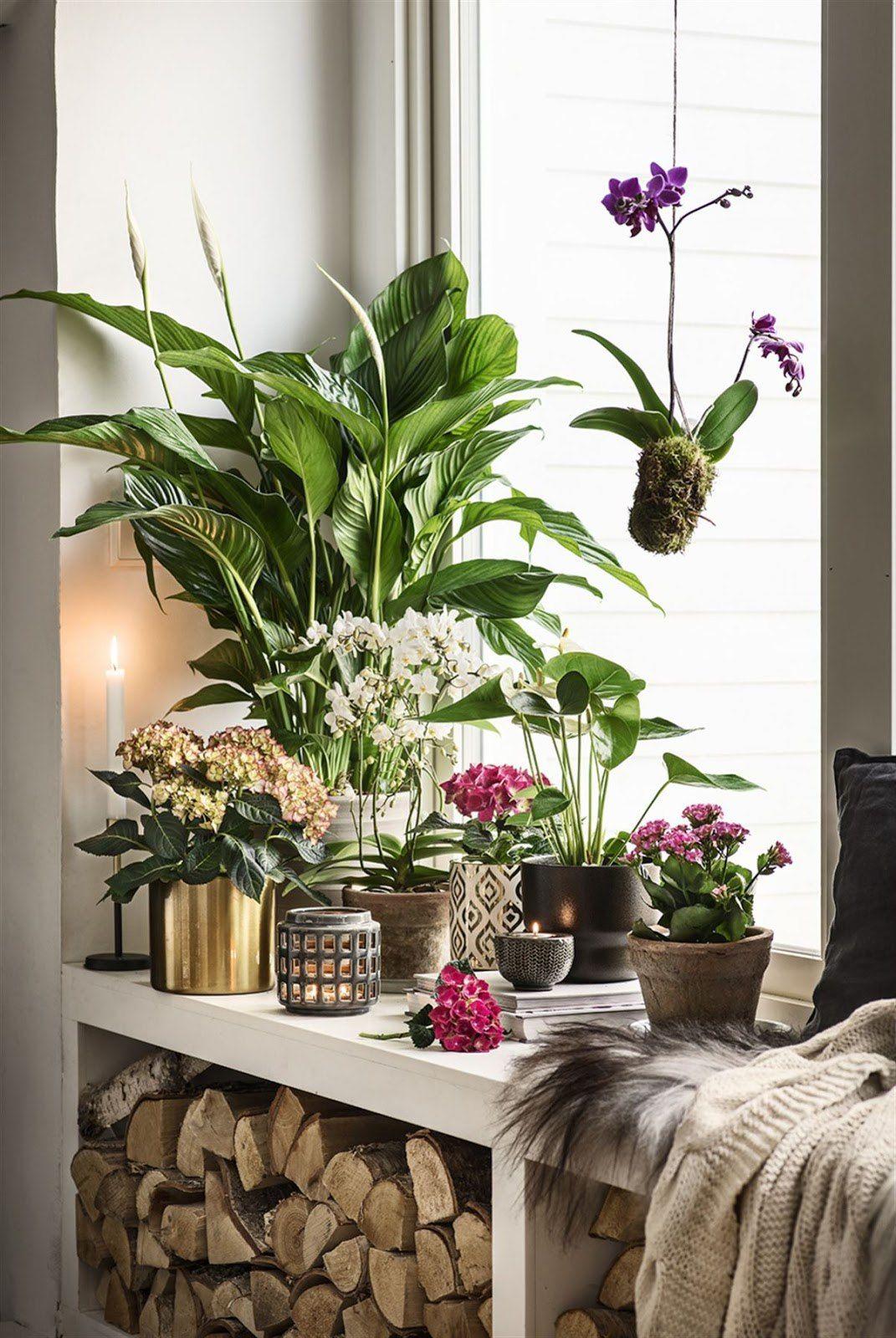 Картинки с растениями в квартире свои комментарии