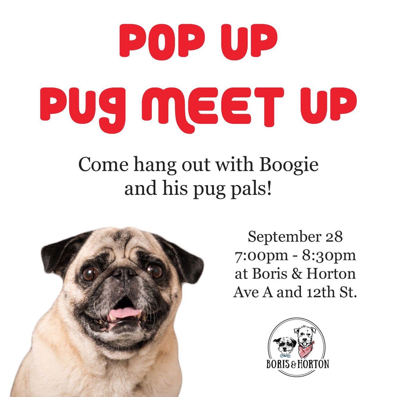 Home Pugs Happy Animals Dog Cafe
