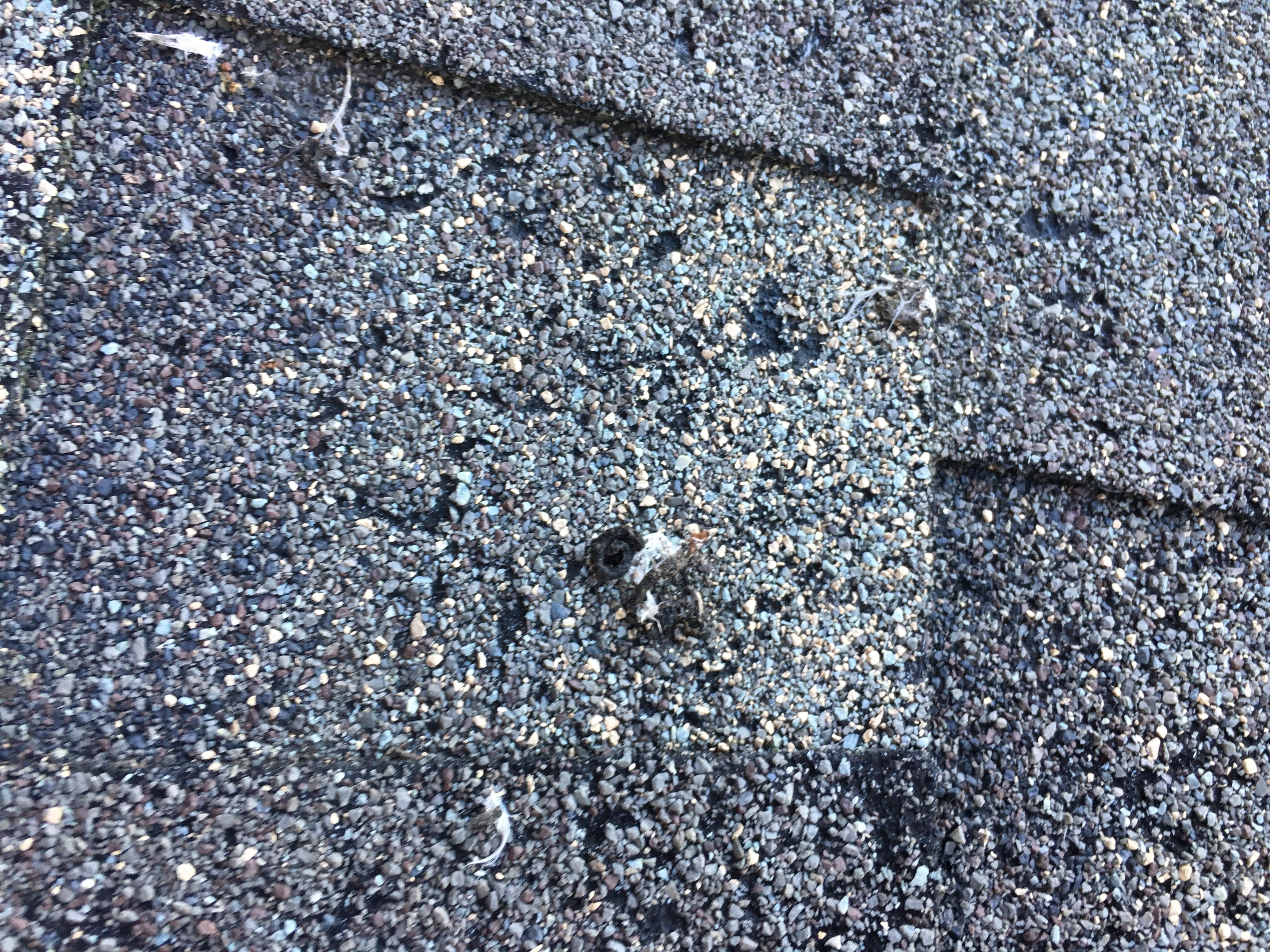 Bird Droppings And Damage We Specialize In Flat Roof Systems Relevant Roofing Are Roofing Specialists Flat Roof Repair Roof Restoration Flat Roof Replacement