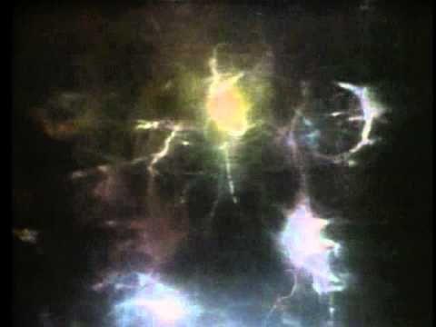 The Brain: Teaching Modules