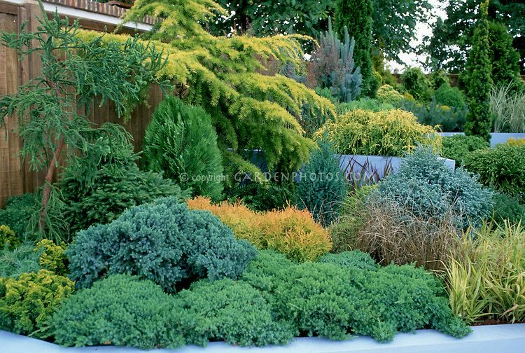 Conifer Garden Ideas find this pin and more on conifer inspirations Evergreen Shrub Garden On Hill Slope With Conifers Evergreens Ornamental Grass In Blue