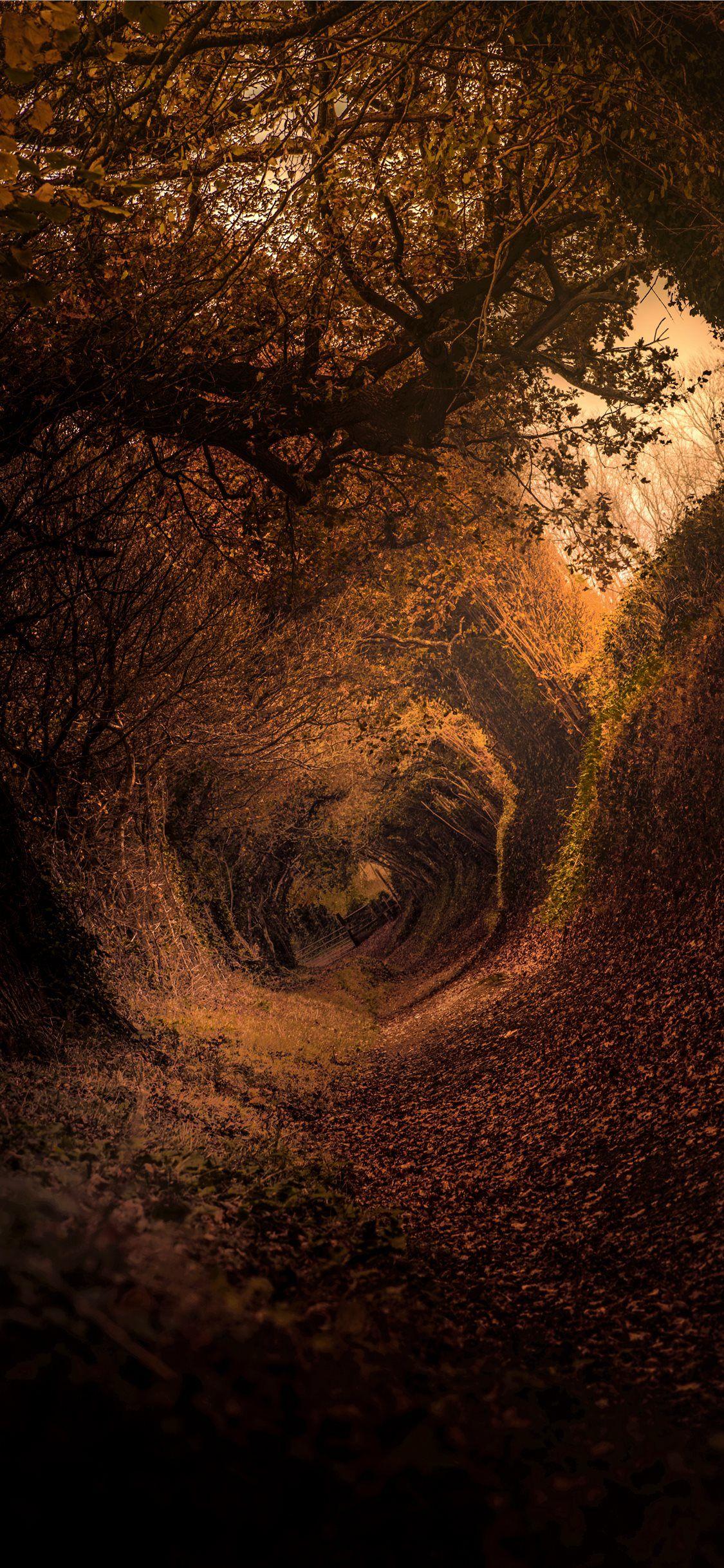 Hobbit Shire iPhone X Wallpapers (Görüntüler ile)