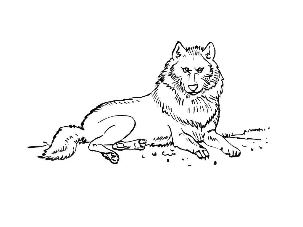 Vous trouverez sur cette page tous les coloriages animaux animaux montagne de Coloriage Tv