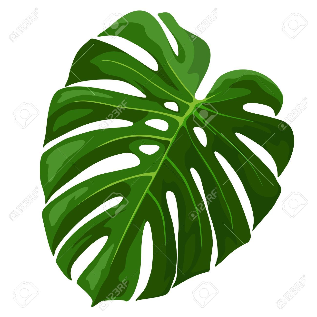59196169 Tropical Leaf Monstera Plant Isolated On White Stock Vector Jpg 1300 1300 Arte Tropical Ilustracao De Plantas Folhas De Plantas Tropical leaves png free download number 400209430,image file format is png,image size is 20 m,this image has been released since 12/07/2018.all prf license pictures and materials on this site are. 59196169 tropical leaf monstera plant