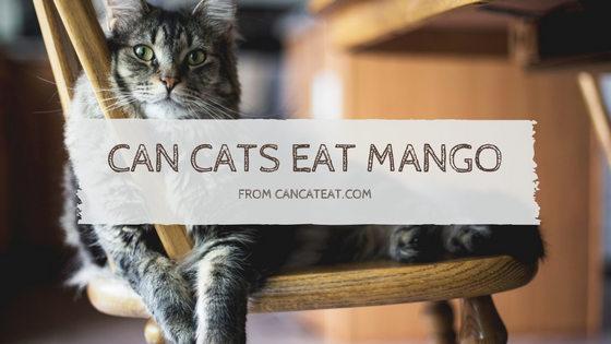 14 Benefits Of Can Cats Eat Mango Everyone Should Know