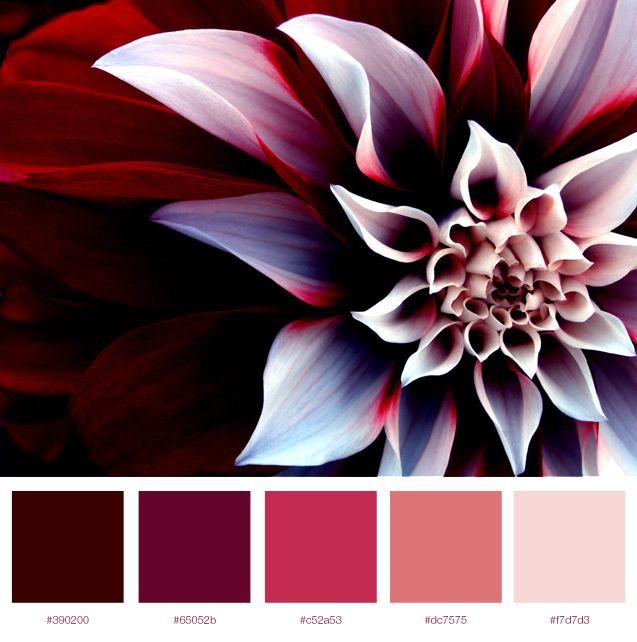 Pink Flower Colour Palette I Love The Depth Contrast