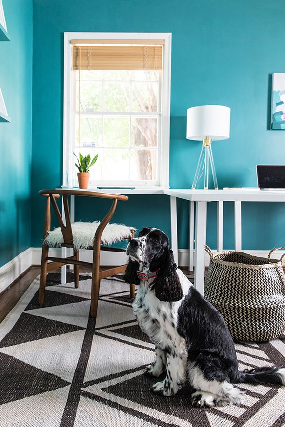 Dogs and decor! Dog bed modern, Modern dog, Inspired homes
