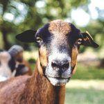 Dierenhealing door reiki kan verlichting geven aan een huisdier met stress / pijn.Door bijv. een verhuizing of een erbij kan je huisdier stress ervaren.