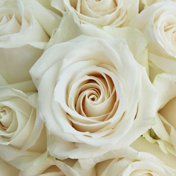 Vendela Ivory Roses Wholesale And Bulk Fiftyflowers Ivory Roses Flower Bouquet Wedding Cream Roses