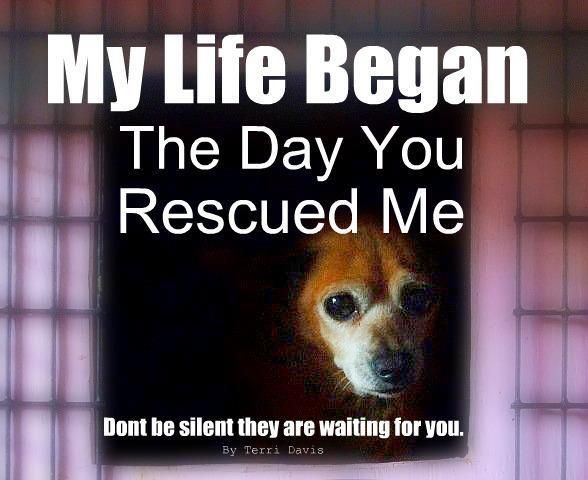 They Re Waiting Animal Rescue Rescue Animal Quotes