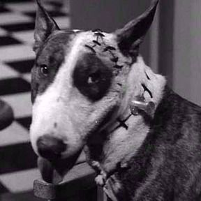 The Original Live Star Of The Short Film Frankenweenie Tim Burton Short Film Animals