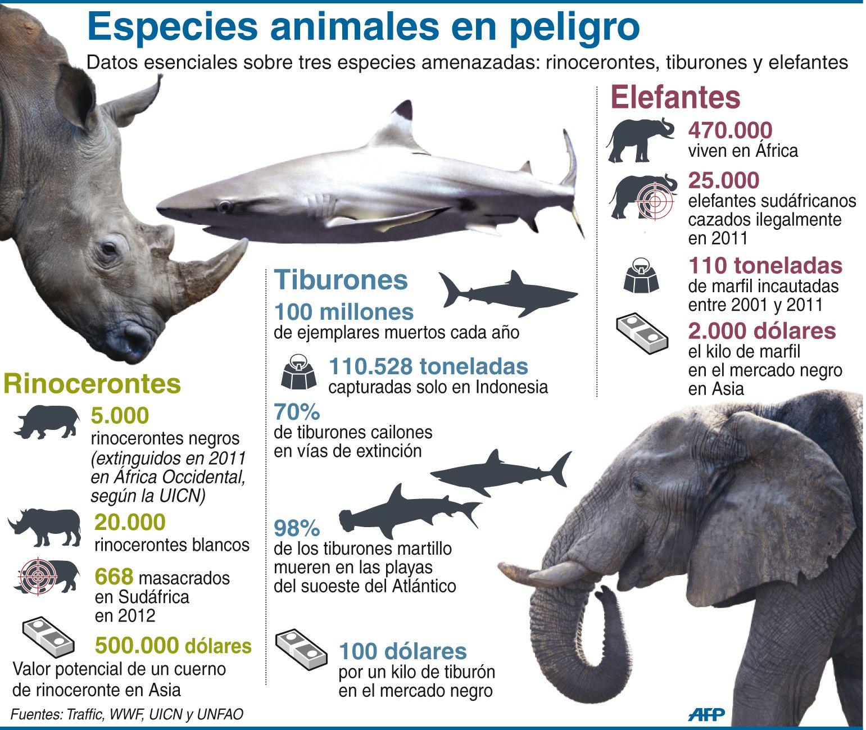 Infografía: tres especies animales en peligro de extinción … | cours | …