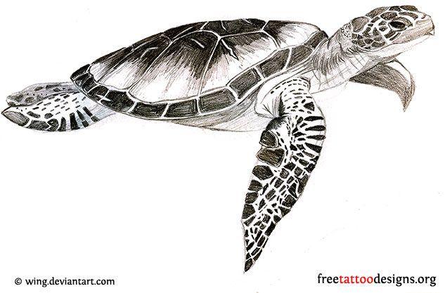 Sea Turtle Tattoo Designs | hawaiian-tribal-turtle-tattoo ...