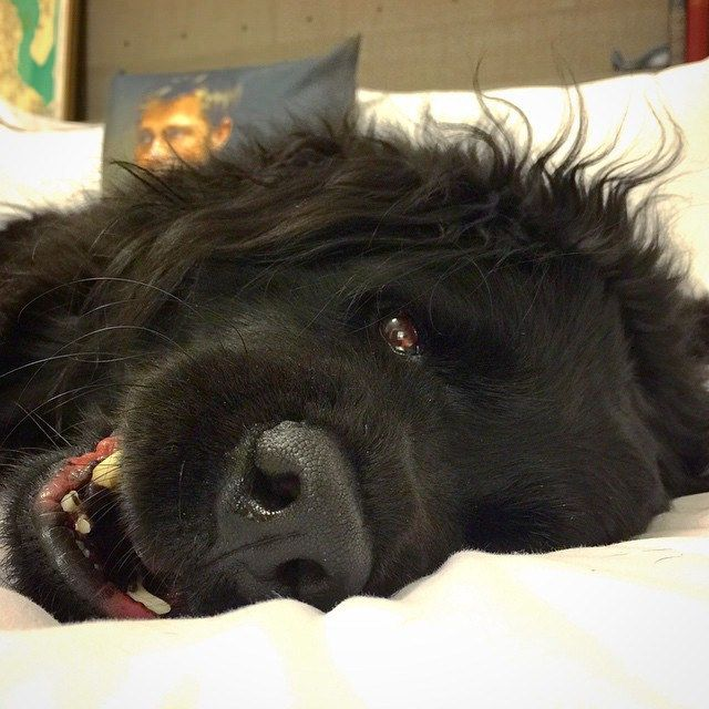 Happy dog | Flickr - Photo Sharing! Dolly by tess durham