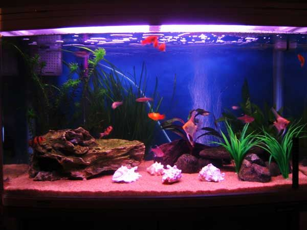 A Nice Bowed Front 40 Gallon Tank With A Mix Of Real And Fake Plants