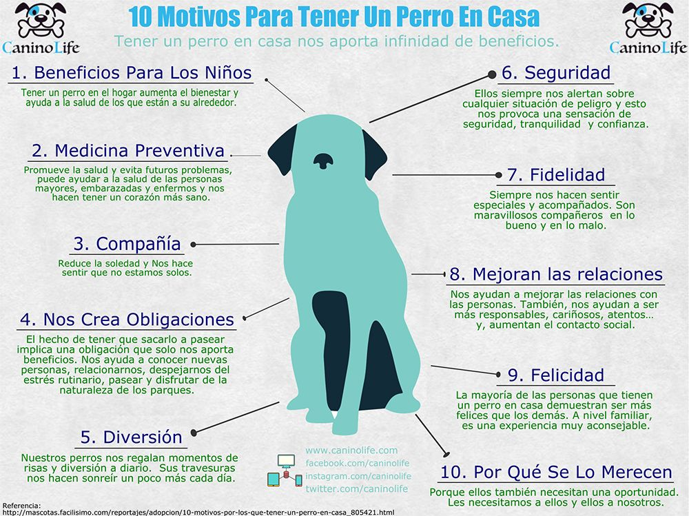 10 motivos para tener un perro en casa caninolife pinterest perros and ten - Perros para tener en casa ...