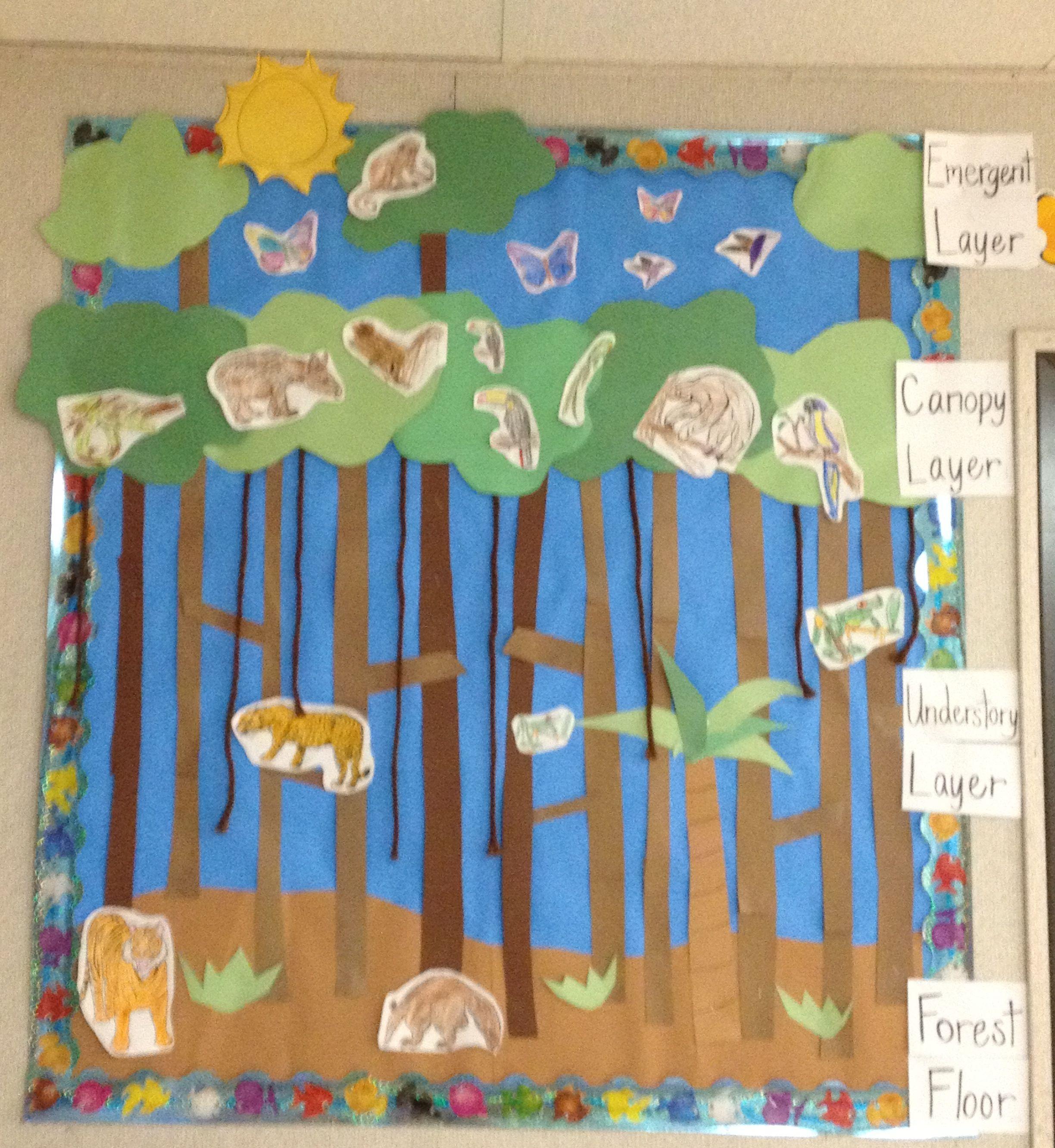 My Rainforest Bulletin Board Children Are Given An Animal
