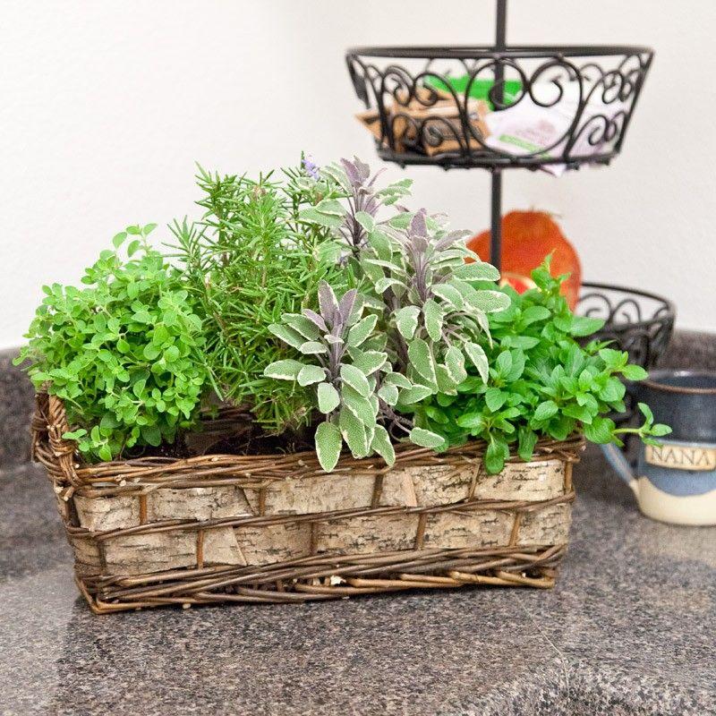 Herb Basket Gift Plant, Foodie Gifts   Windowbox.com