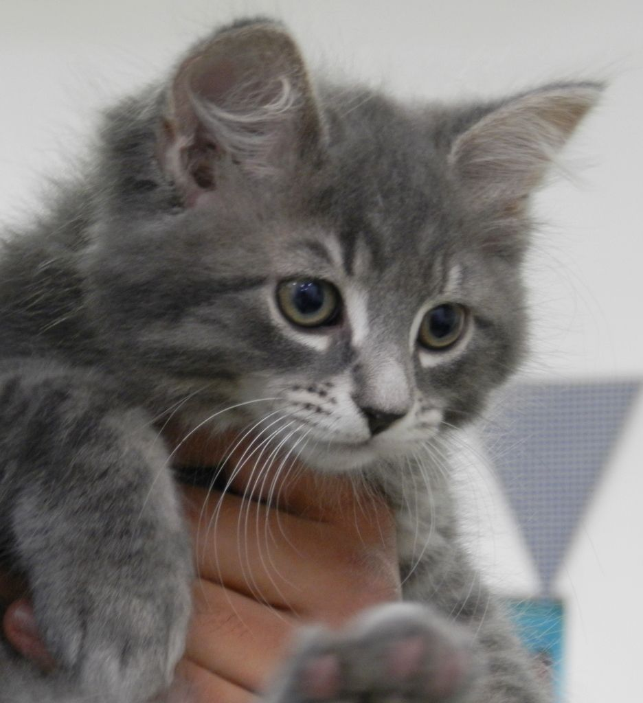 This sweet kitten was adopted over the weekend but there are