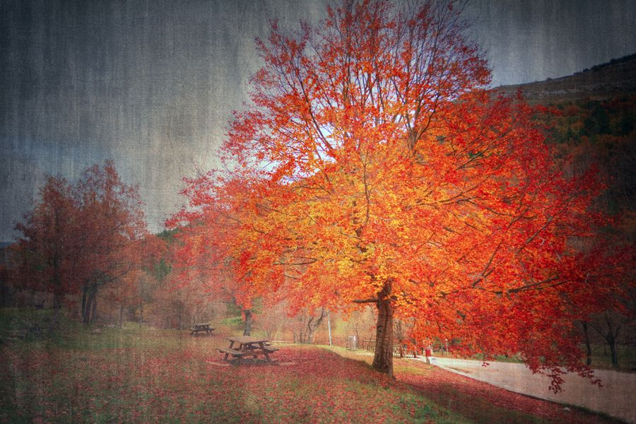 The Last Leaves... by Eric Rousset