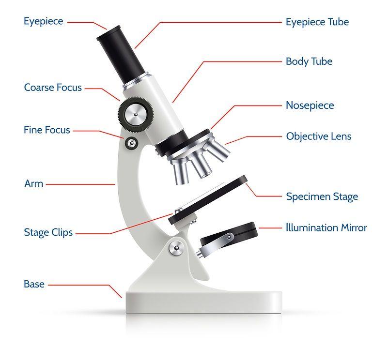 Pin de Lucy beltran bustos en microscopio optico