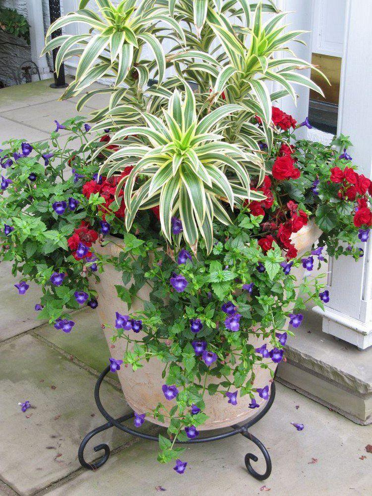 p tunias en violet fleurs rouges et chlorophytum comosum. Black Bedroom Furniture Sets. Home Design Ideas