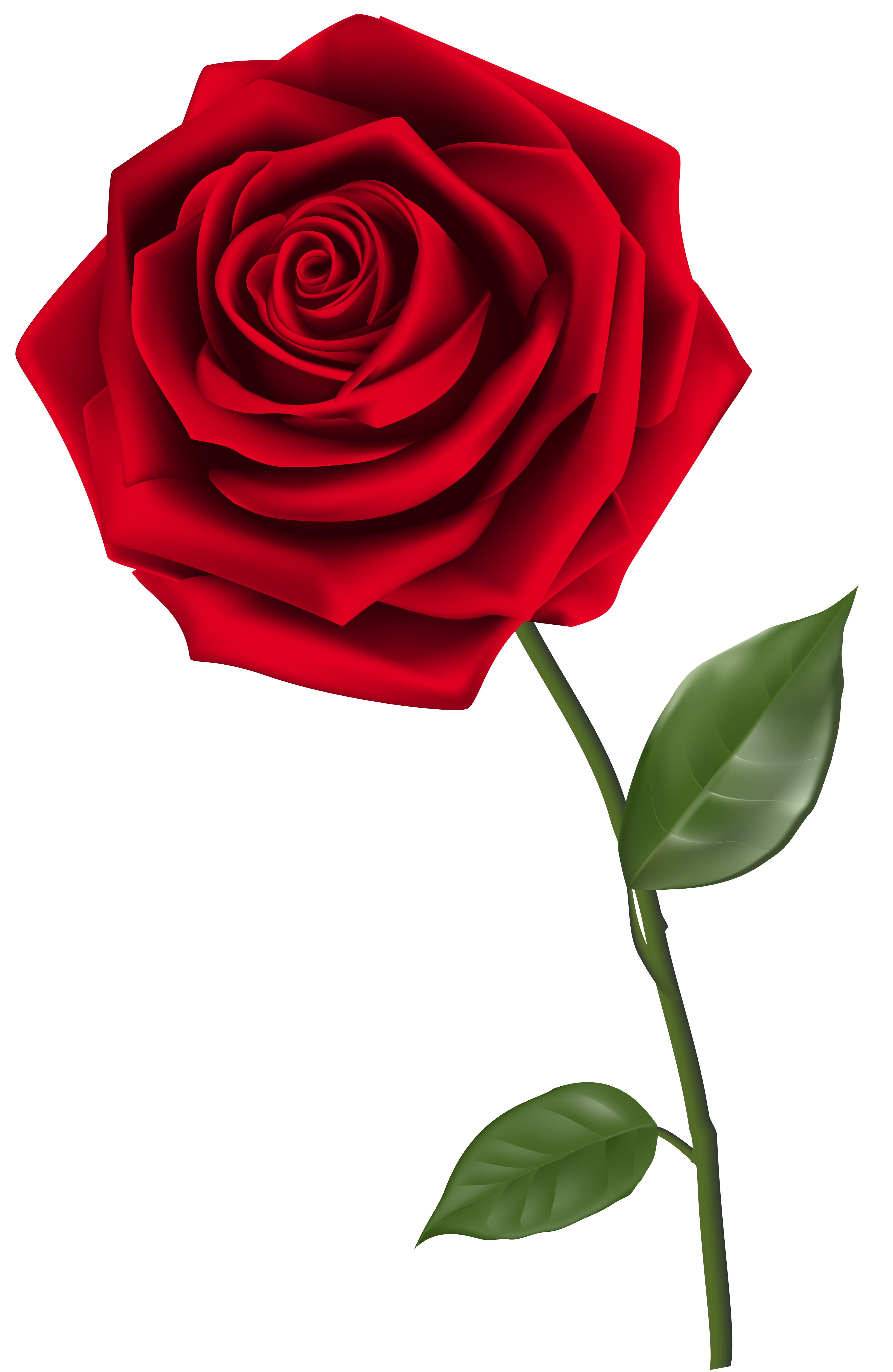 30 Trends Ideas Single Rose Flower Transparent Background In 2020 Red Rose Png Red Rose Flower Single Red Rose