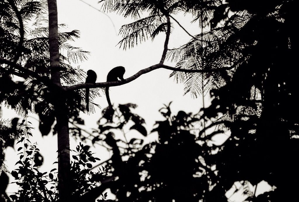 Floresta tropical Amazônica © Manzzan #luxosqueoimpériotece #floresta #natureza #florestatropical #tropical #império #imperivm #imperivmriodejaneiro | Amazon Rainforest © Manzzan #luxuriesthattheempireweaves #forest #nature #rainforest #tropical #empire #imperivm #imperivmriodejaneiro