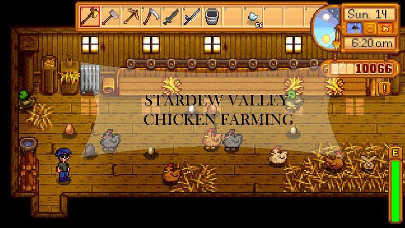 Are Chickens Good Business Stardew Valley Coop Chicken Farm