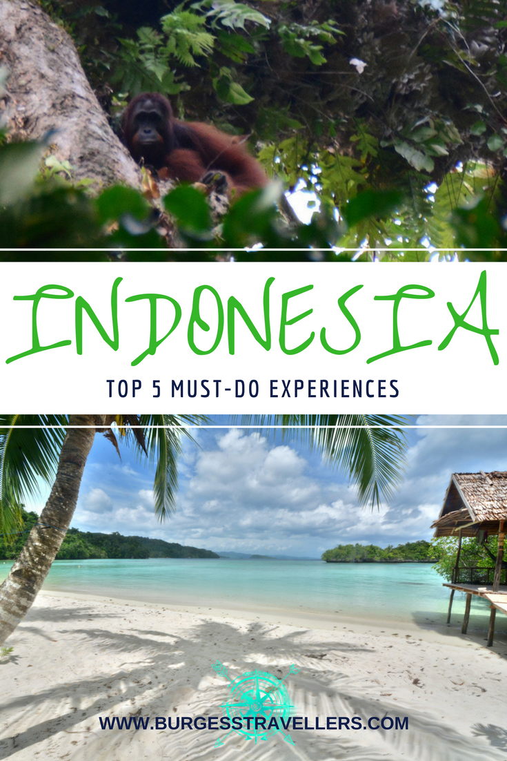 Top 5 Incredible Indonesia Experiences (besides Bali) www.burgesstravellers.com   #indonesia #travel #traveltips #travelblog #beachlife #orangutans