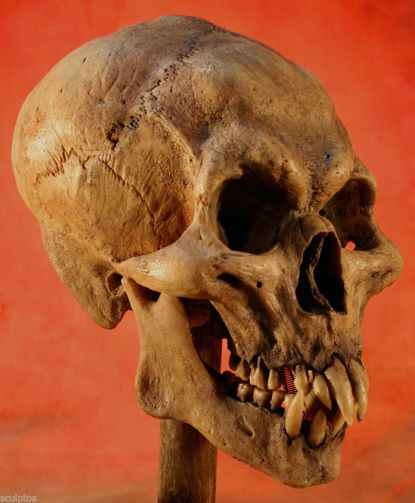 Human Jaw Tattoo: Real Sideshow Horror Gaff Vampire Dracula Nosferatu Human